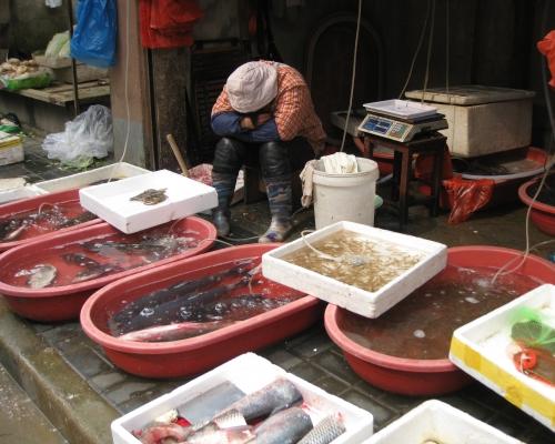 17 2010.02.03. Xingfu Lu